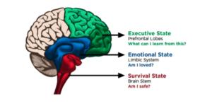 CD Brain State Model