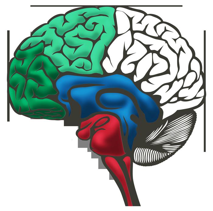 Brain ALL Parts